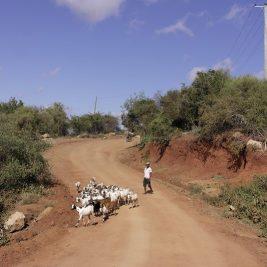 Kasigau Wildlife Corridor