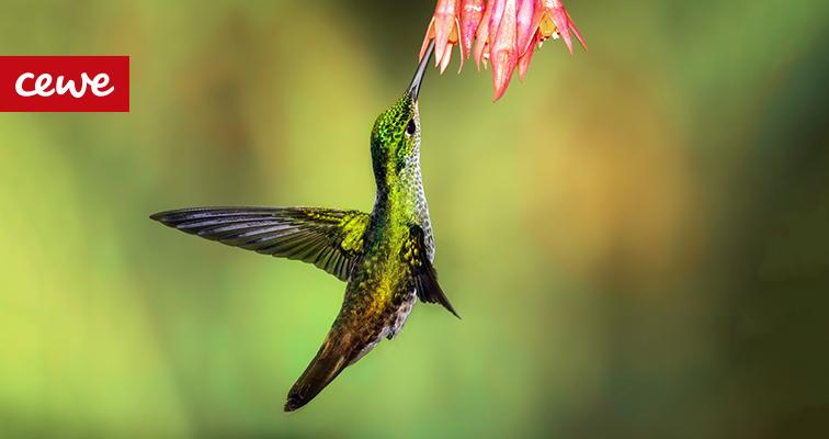 ptak - makrofotografia